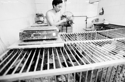 Poultry is sitting in cages in a stark, white tiled room in a market in Shanghai. In the background, the bare chested proprietor is putting an end to one of them, readying it for his customer. In a corner is a machine that will pluck the feathers of the birds in a few seconds. 